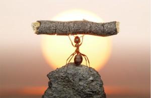 resiliencia-hormiga1